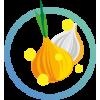Onion Flavones®